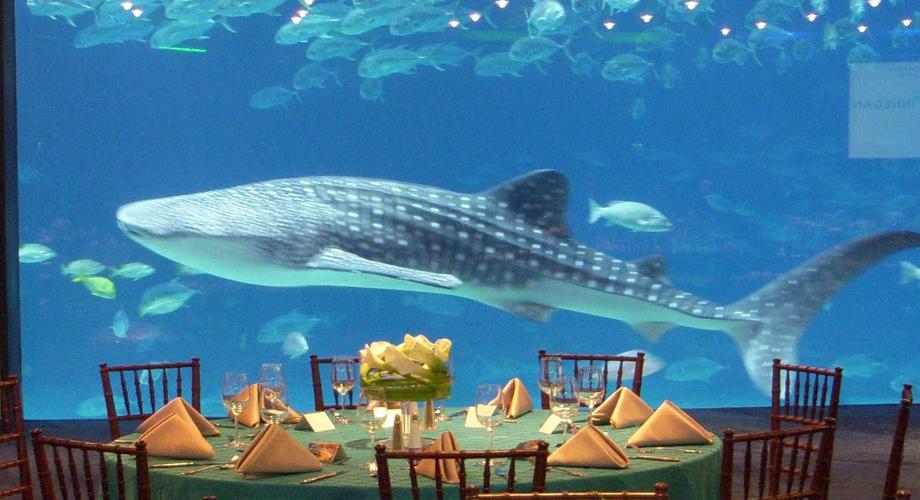 أكبر أحواض السمك العالم 9.jpg