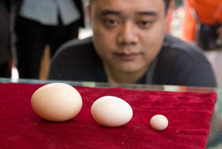 اصغر بيضه العالم