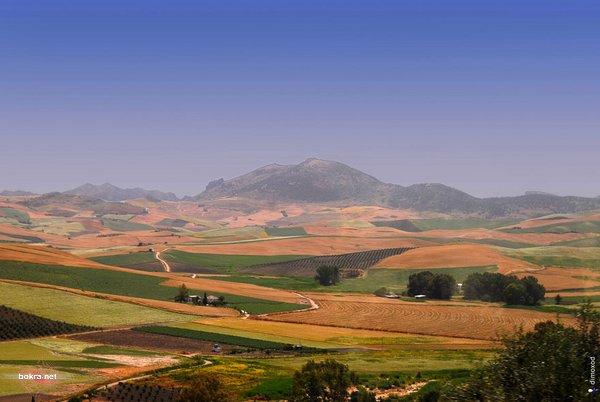 القرية البيضآء أولفيرا Olvera 6.jpg