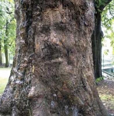 صورة مرسي تظهر على شجرة في المانيا