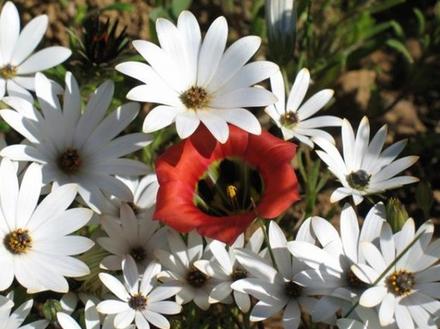 """""""ناماكولاند""""....معجزة زهور الربيع بصحراء الجافة"""