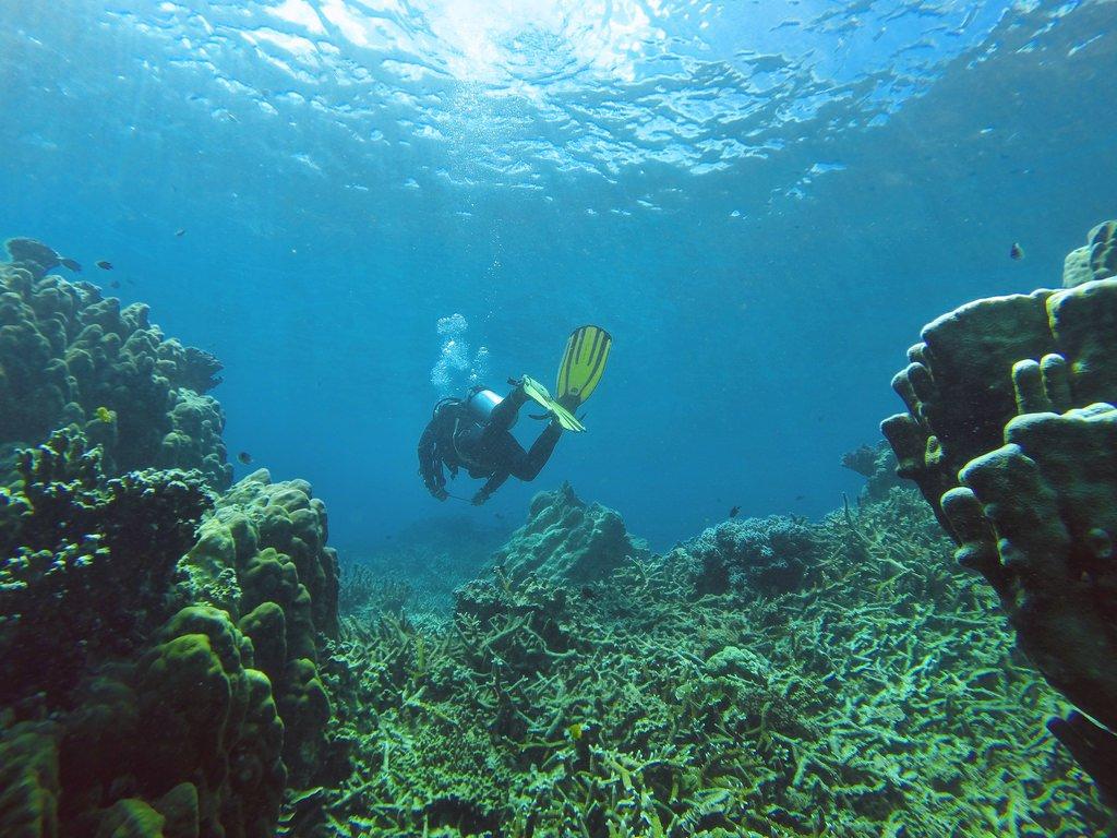 زيارة الى جزيرة تيومان في ماليزيا 1642869742