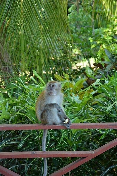 زيارة الى جزيرة تيومان في ماليزيا 316419787