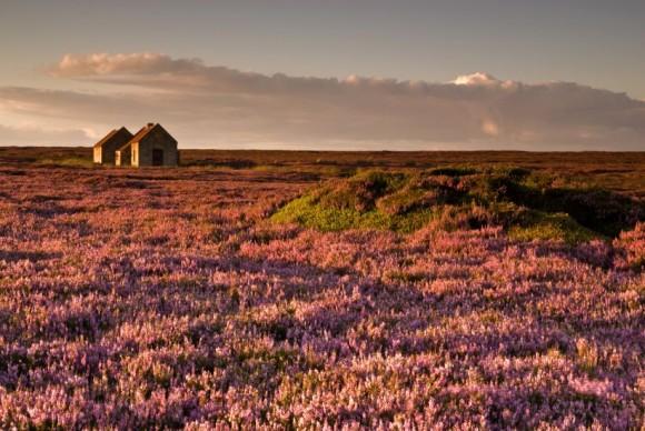 صور رائعة من المسابقة البريطانية للمناظر الطبيعية 1557473509