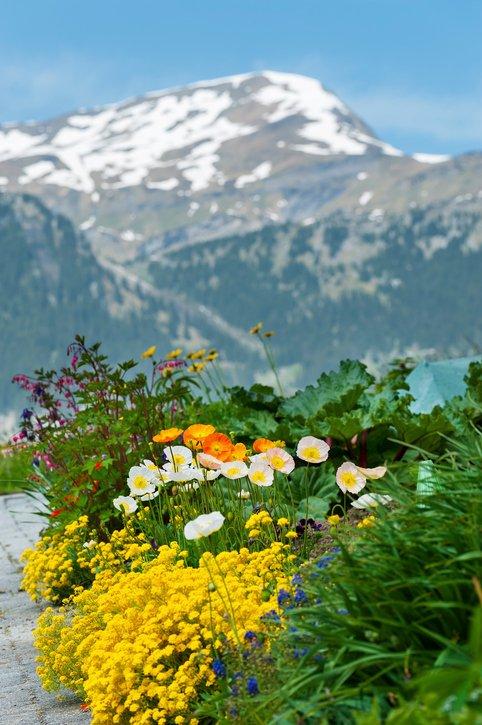 تعرف على اروع مدينة ريفية سويسرية 436742866