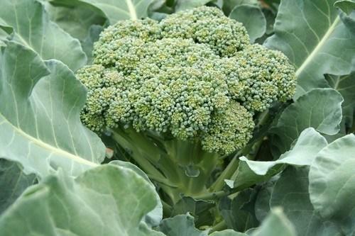 أطعمة مضادة للسموم للحفاظ على الصحة Original%20%286%29%281%29